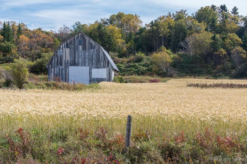 Barn near Saint-Ulrich