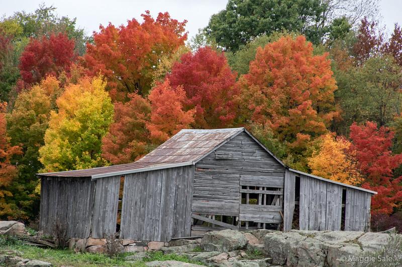 Old barn near Gananonque