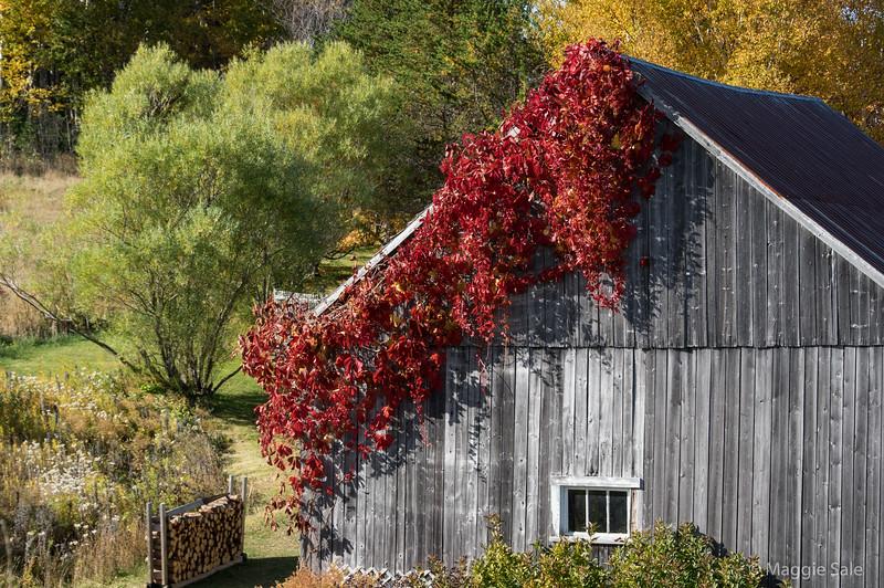 Barn near Douglastown