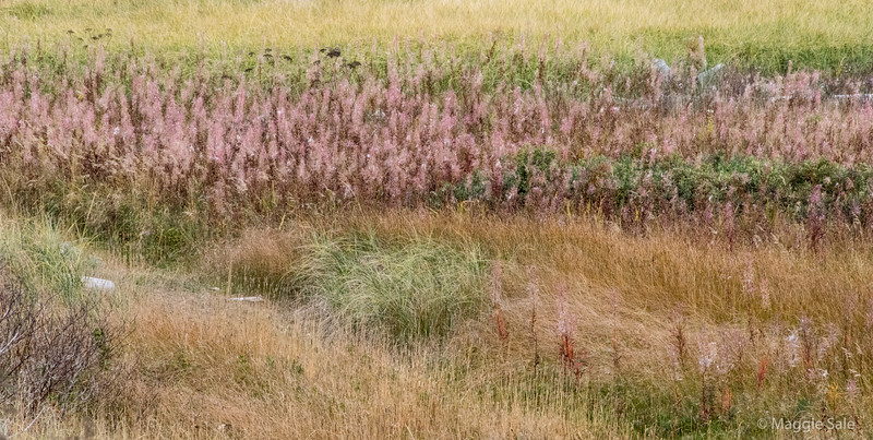 Many lovely grasses and plants on the spit at Douglastown