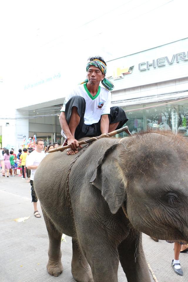 2014-11-14 Surin Elephant Welcome Feast 338