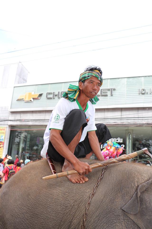 2014-11-14 Surin Elephant Welcome Feast 341