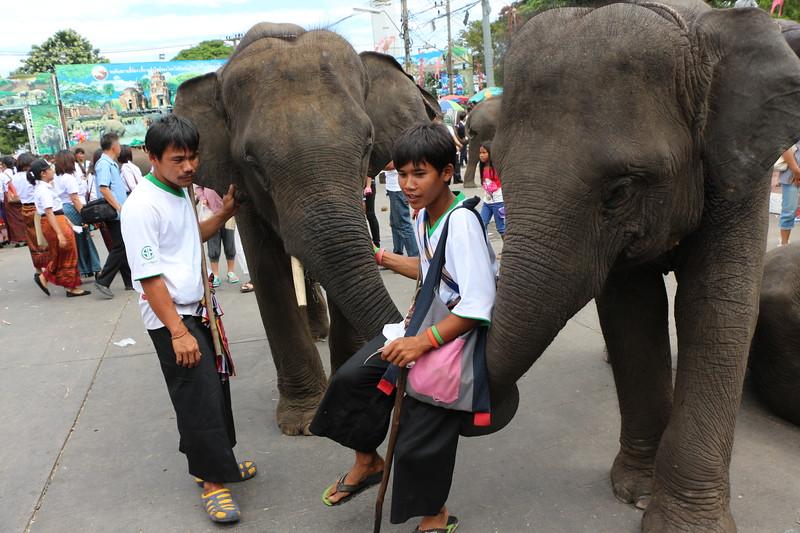 2014-11-14 Surin Elephant Welcome Feast 690.JPG
