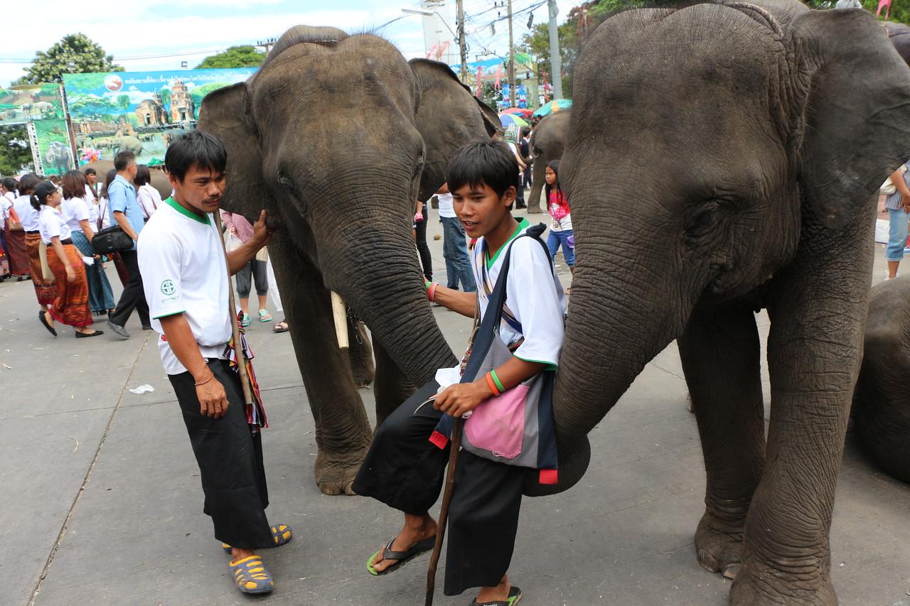 2014-11-14 Surin Elephant Welcome Feast 690
