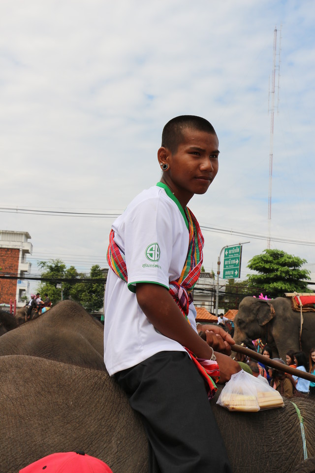 2014-11-14 Surin Elephant Welcome Feast 850