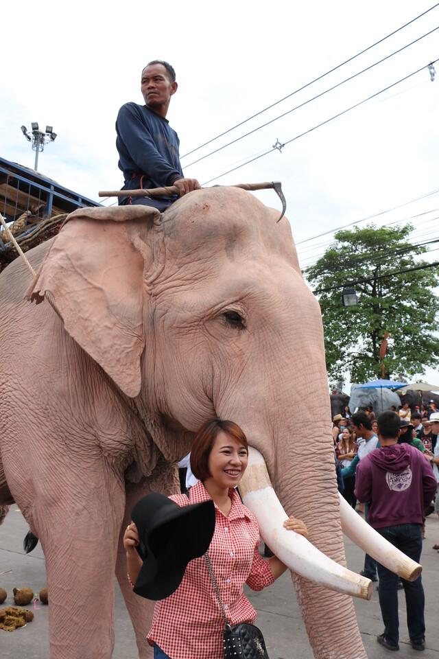 2014-11-14 Surin Elephant Welcome Feast 662