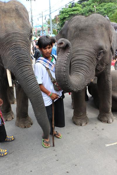 2014-11-14 Surin Elephant Welcome Feast 748.JPG