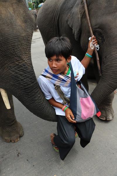 2014-11-14 Surin Elephant Welcome Feast 707