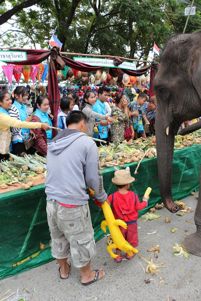 2014-11-14 Surin Elephant Welcome Feast 542