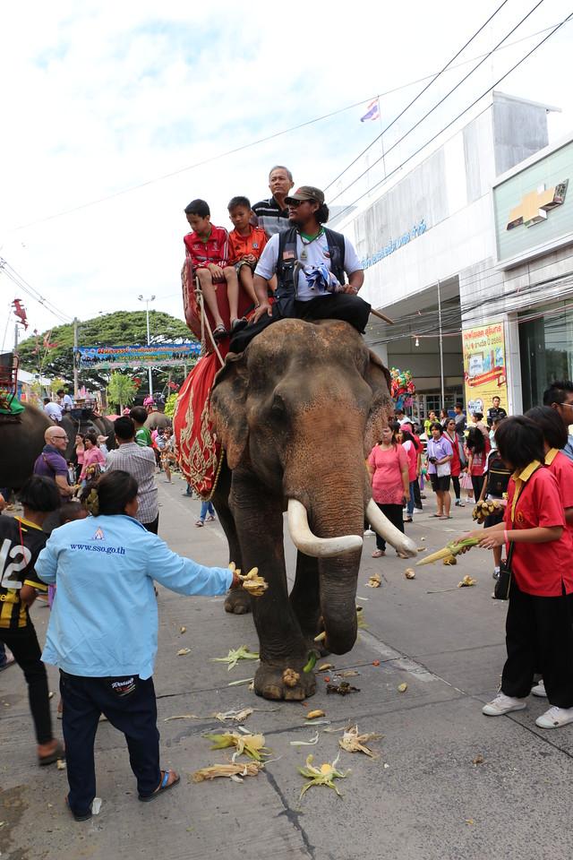 2014-11-14 Surin Elephant Welcome Feast 357
