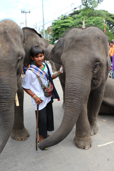 2014-11-14 Surin Elephant Welcome Feast 727.JPG