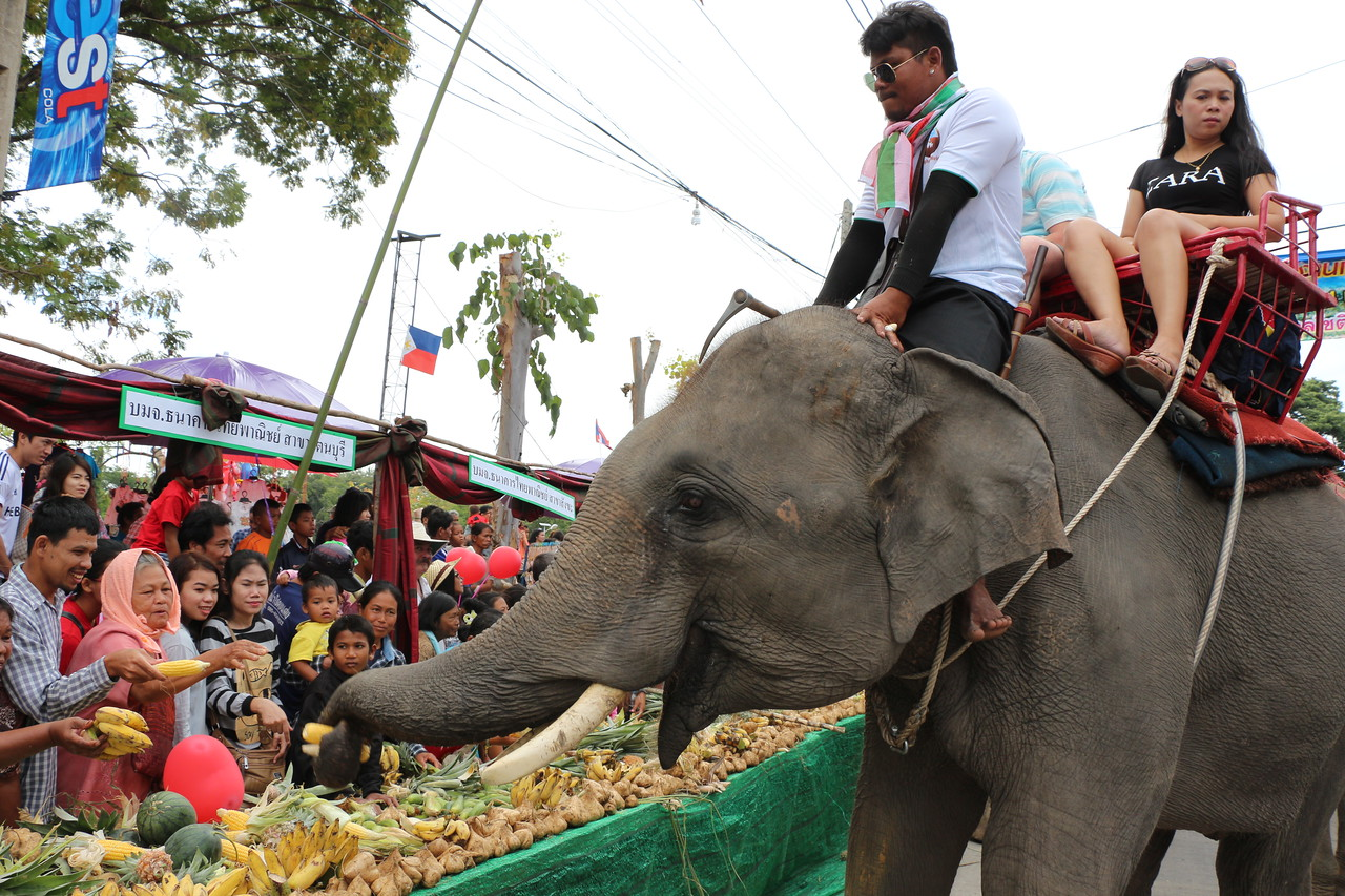 2014-11-14 Surin Elephant Welcome Feast 239