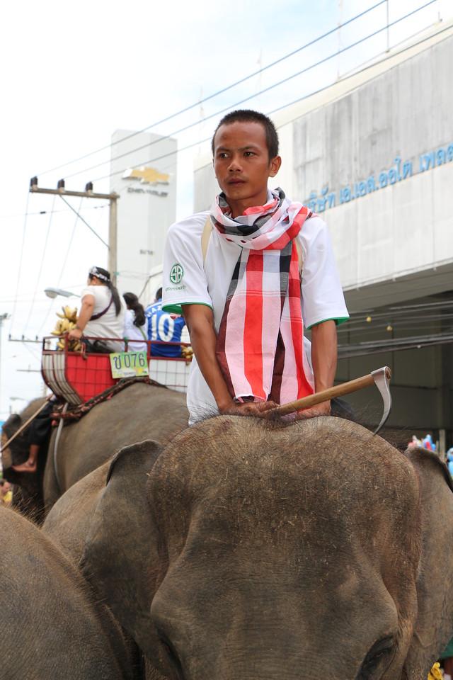 2014-11-14 Surin Elephant Welcome Feast 319