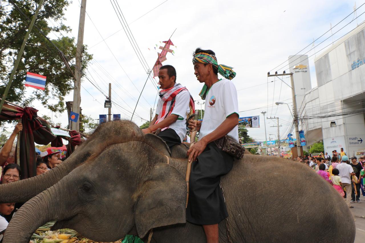 2014-11-14 Surin Elephant Welcome Feast 314