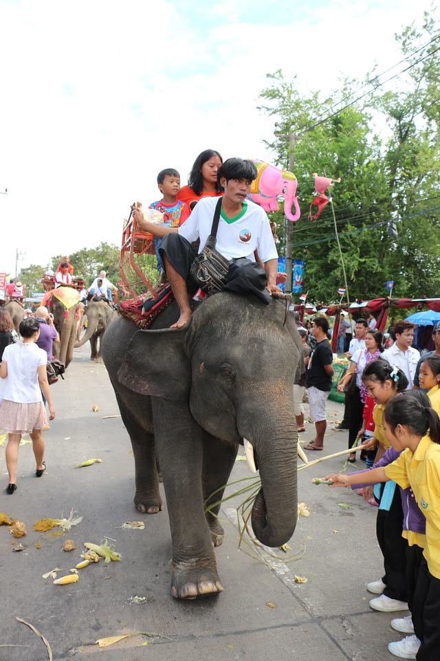 2014-11-14 Surin Elephant Welcome Feast 449