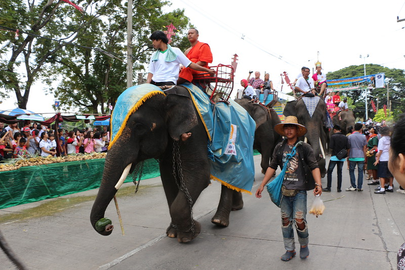 2014-11-14 Surin Elephant Welcome Feast 206