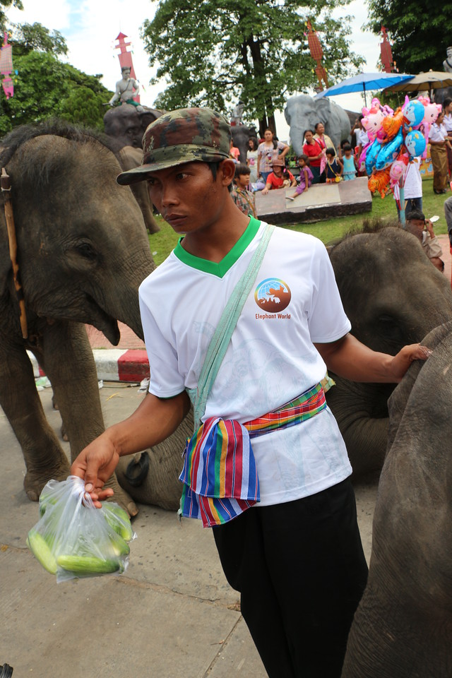 2014-11-14 Surin Elephant Welcome Feast 802