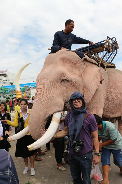 2014-11-14 Surin Elephant Welcome Feast 634
