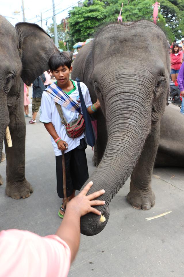 2014-11-14 Surin Elephant Welcome Feast 744