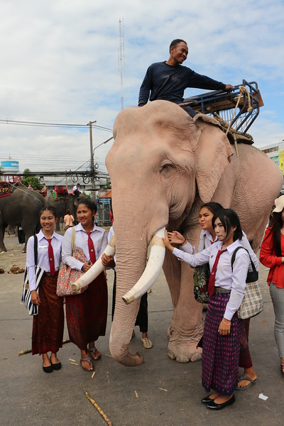 2014-11-14 Surin Elephant Welcome Feast 770.JPG