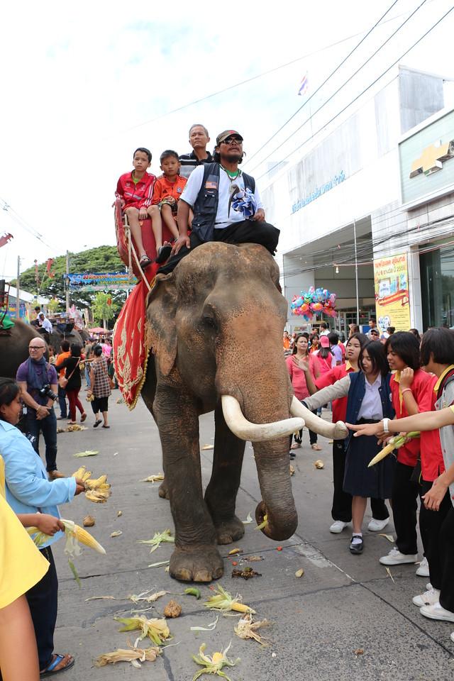 2014-11-14 Surin Elephant Welcome Feast 359