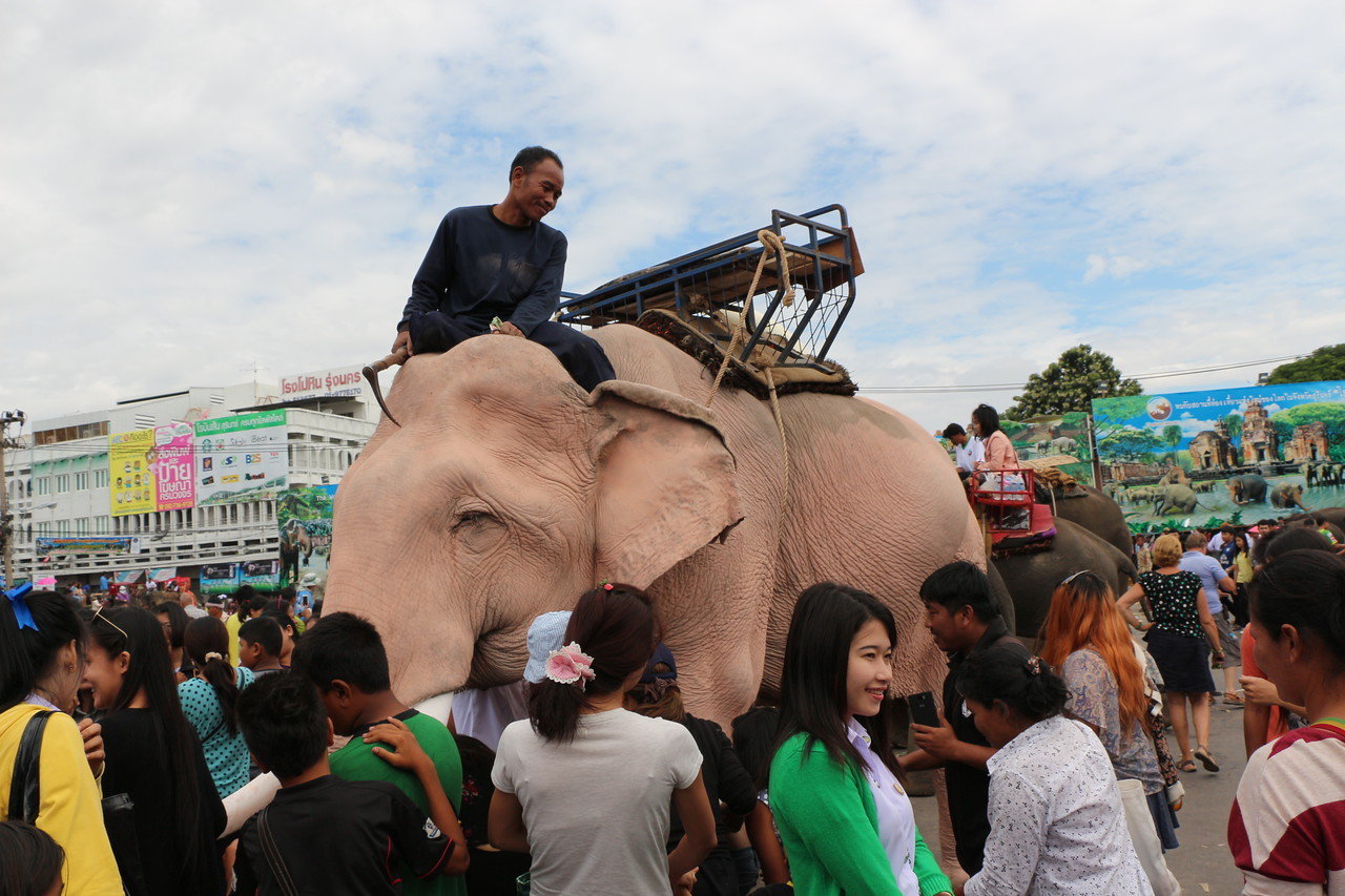 2014-11-14 Surin Elephant Welcome Feast 640