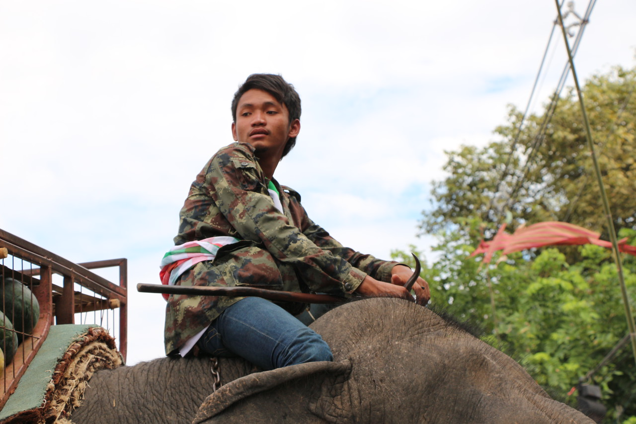 2014-11-14 Surin Elephant Welcome Feast 585