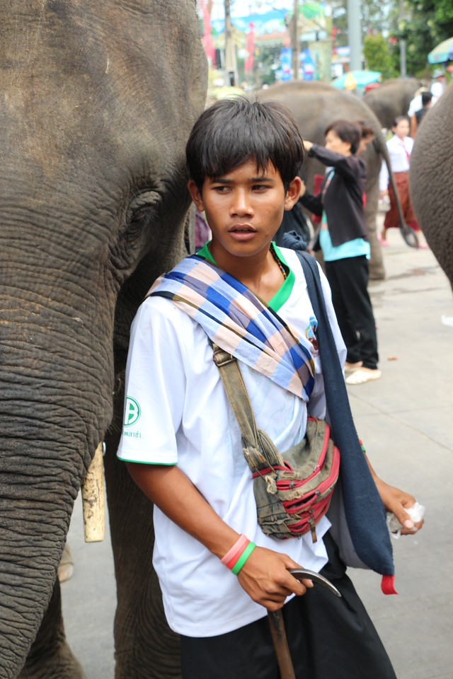 2014-11-14 Surin Elephant Welcome Feast 729