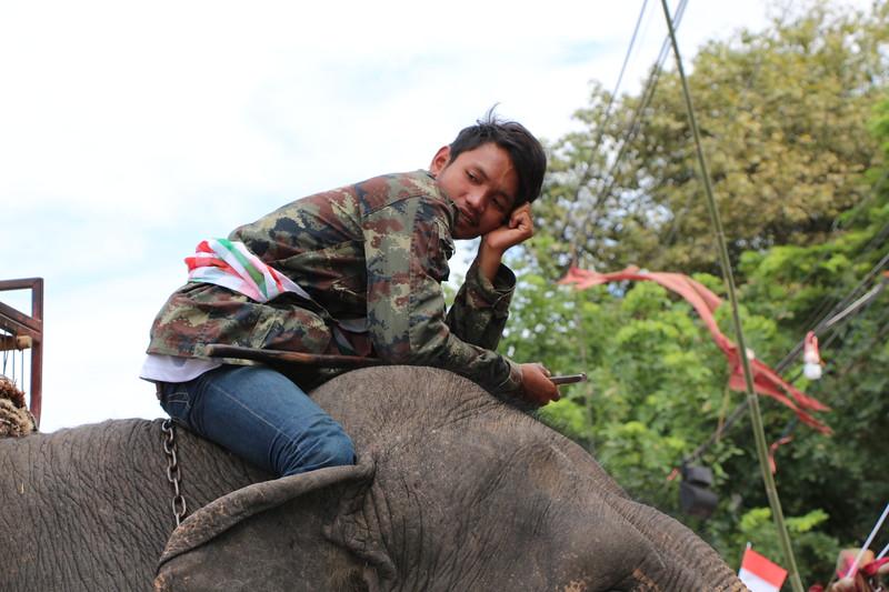 2014-11-14 Surin Elephant Welcome Feast 584
