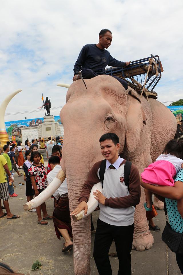 2014-11-14 Surin Elephant Welcome Feast 627