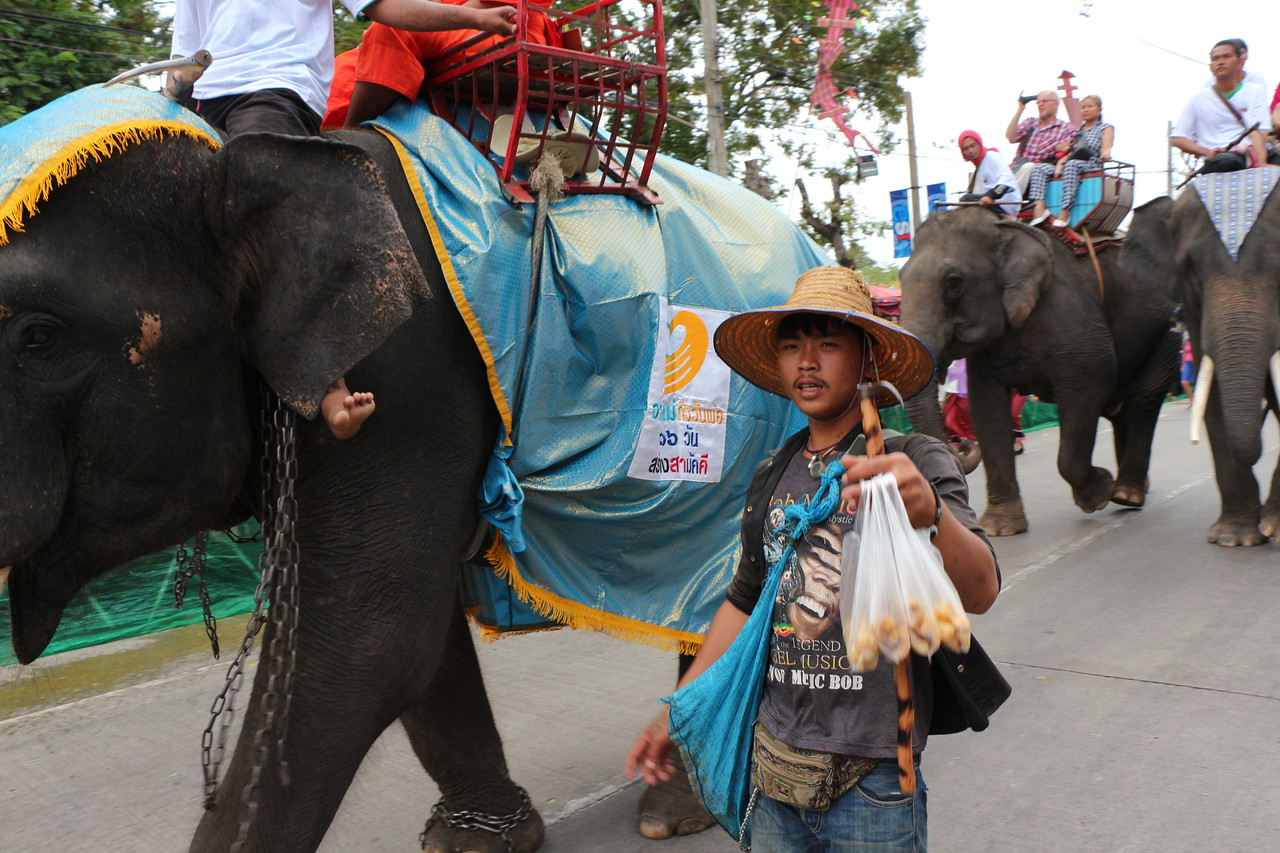 2014-11-14 Surin Elephant Welcome Feast 210