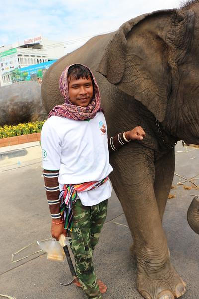 2014-11-14 Surin Elephant Welcome Feast 834.JPG
