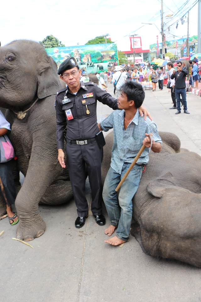 2014-11-14 Surin Elephant Welcome Feast 677
