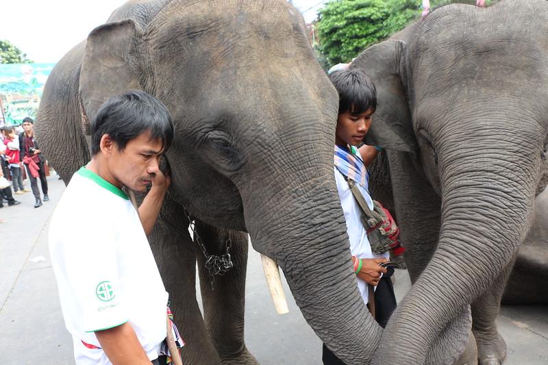 2014-11-14 Surin Elephant Welcome Feast 717.JPG