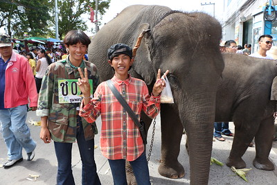 2014-11-14 Surin Elephant Welcome Feast 458
