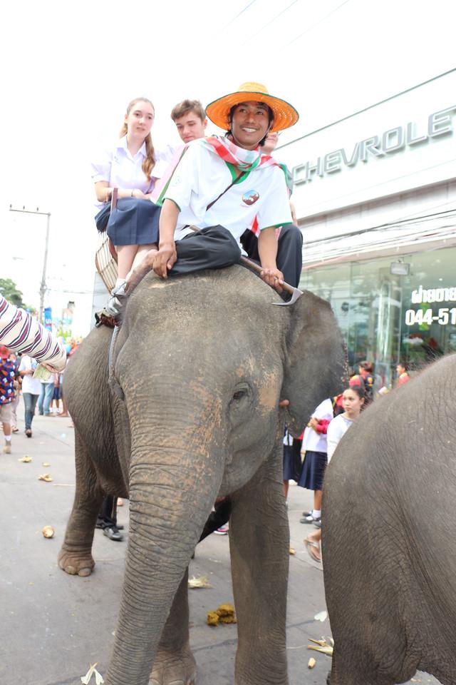 2014-11-14 Surin Elephant Welcome Feast 368