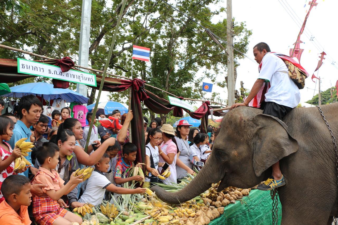 2014-11-14 Surin Elephant Welcome Feast 295