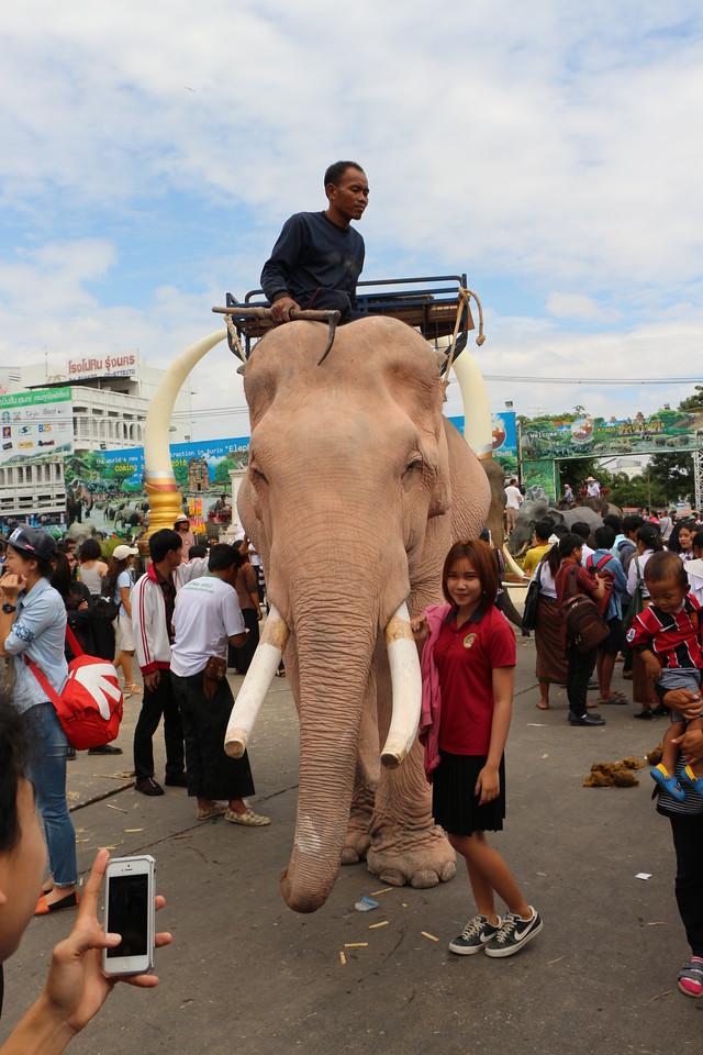 2014-11-14 Surin Elephant Welcome Feast 654
