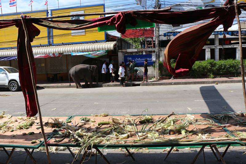 2014-11-14 Surin Elephant Welcome Feast 882.JPG