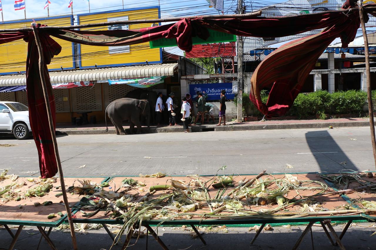 2014-11-14 Surin Elephant Welcome Feast 882