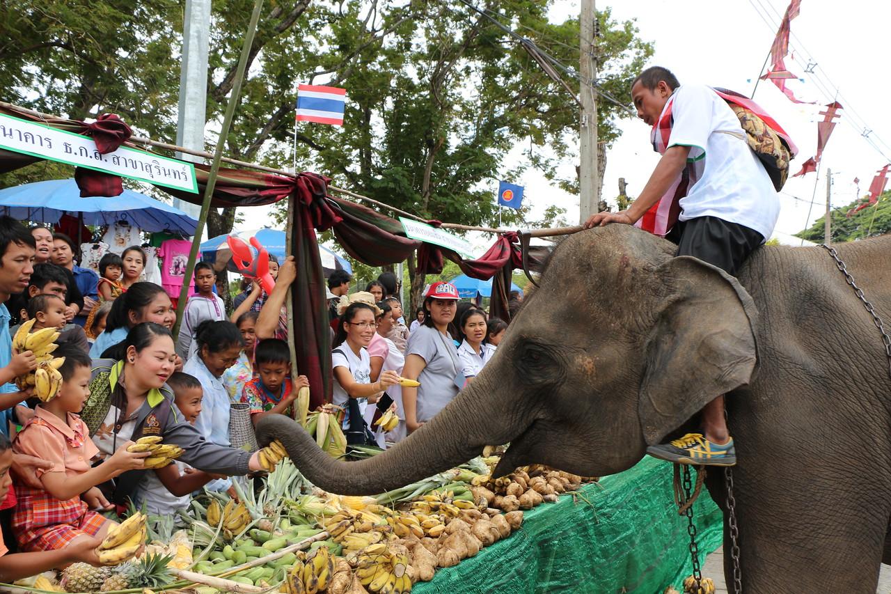 2014-11-14 Surin Elephant Welcome Feast 297