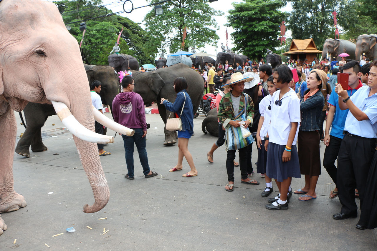 2014-11-14 Surin Elephant Welcome Feast 664