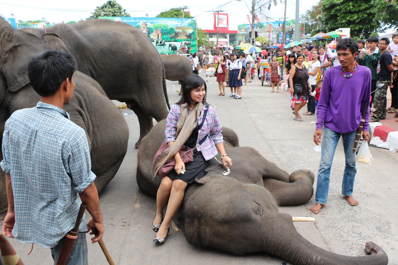 2014-11-14 Surin Elephant Welcome Feast 672