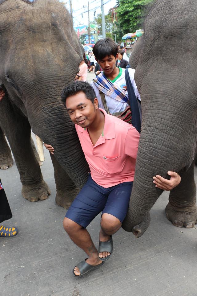 2014-11-14 Surin Elephant Welcome Feast 722