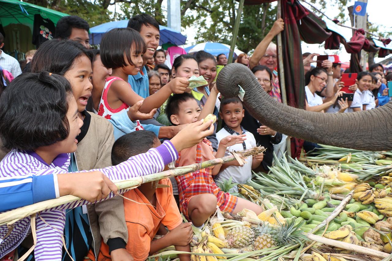 2014-11-14 Surin Elephant Welcome Feast 311