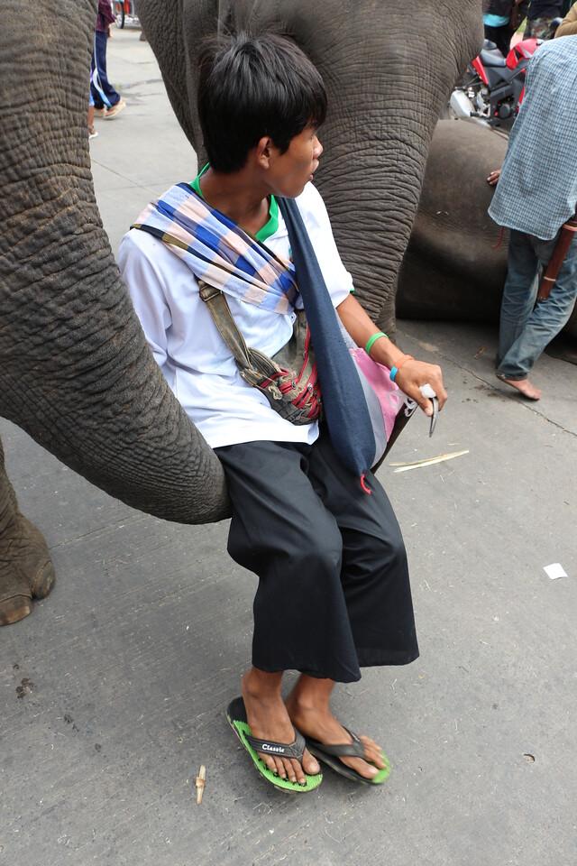 2014-11-14 Surin Elephant Welcome Feast 700