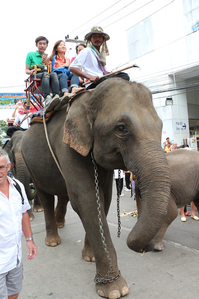 2014-11-14 Surin Elephant Welcome Feast 230.JPG