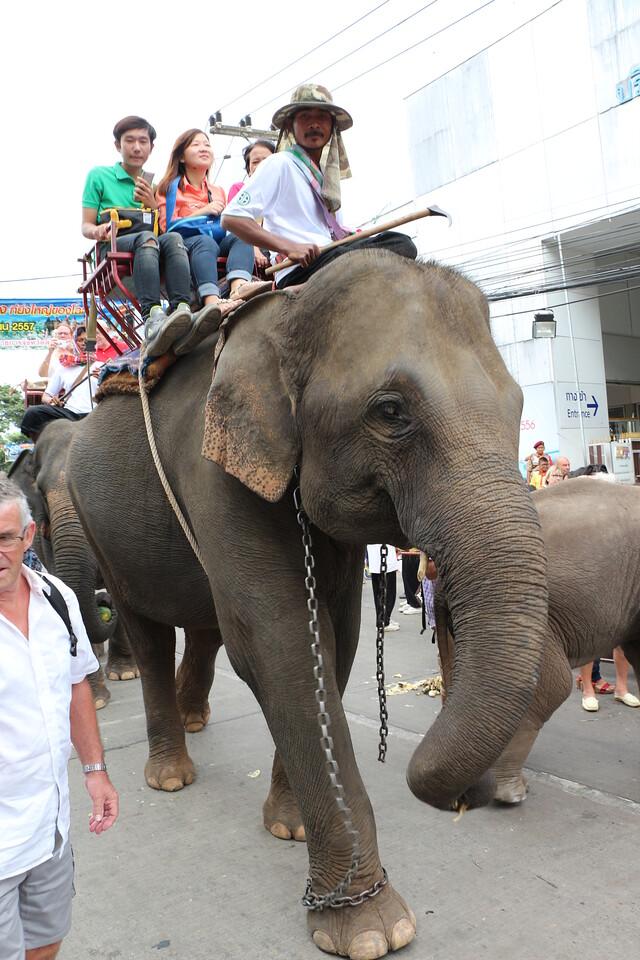 2014-11-14 Surin Elephant Welcome Feast 230