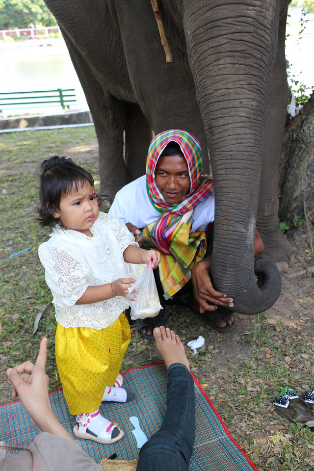 2014-11-14 Surin Elephant Welcome Feast 907