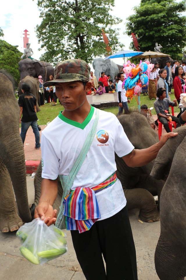 2014-11-14 Surin Elephant Welcome Feast 801